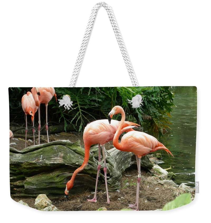 Flamingo Weekender Tote Bag featuring the photograph Flamingos by Carol Turner