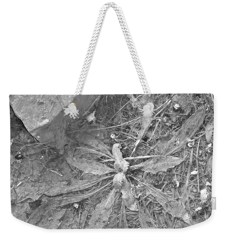 Plant Weekender Tote Bag featuring the photograph Flattened by Angus Hooper Iii