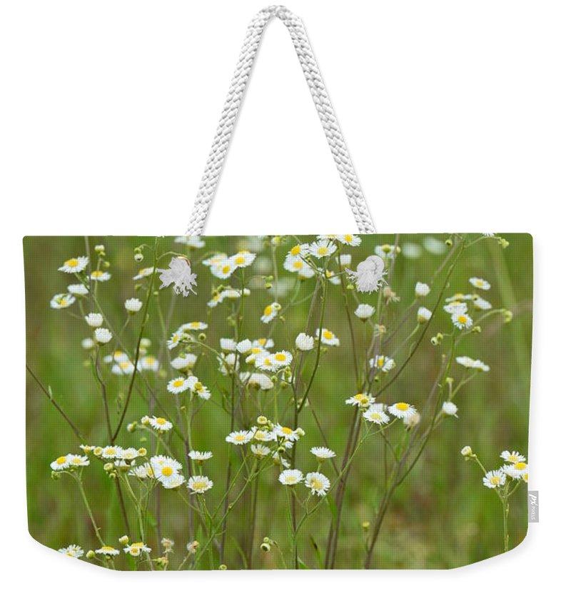 Fleabane In The Meadow Weekender Tote Bag featuring the photograph Fleabane In The Meadow by Maria Urso