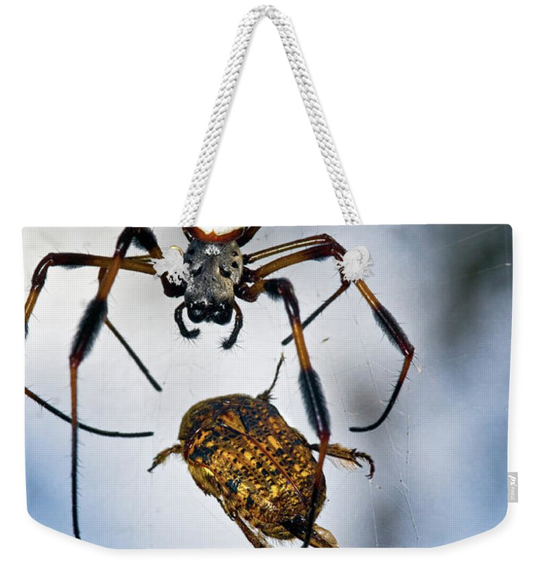 Golden Silk Orb-weaver Weekender Tote Bag featuring the photograph Flew In For Dinner by Christopher Holmes