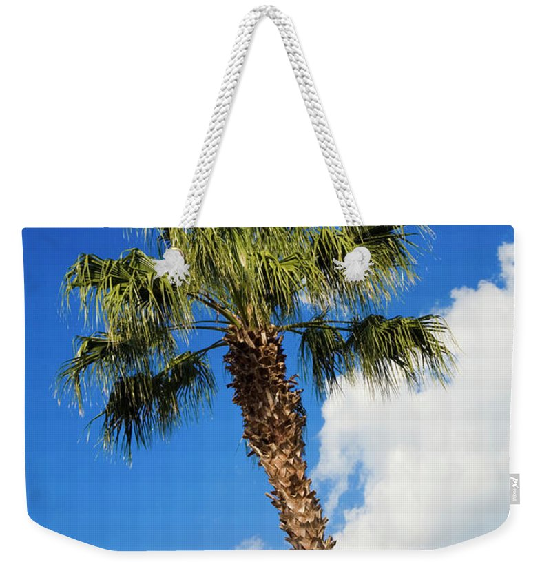 Florida State Tree Weekender Tote Bag featuring the photograph Florida State Tree by Diane Macdonald