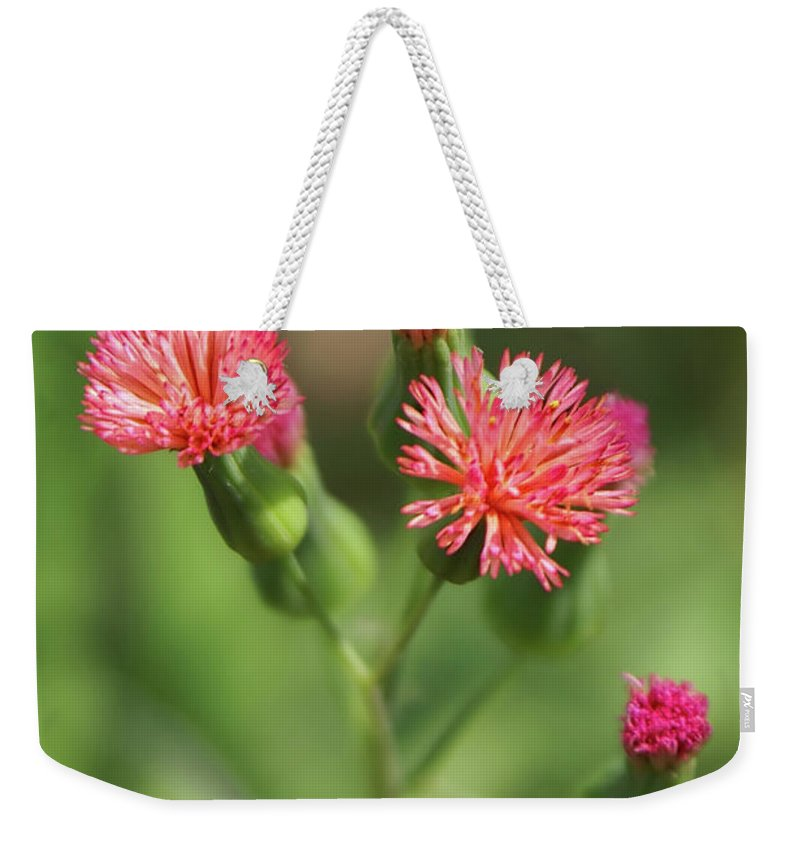 Wildflower Weekender Tote Bag featuring the photograph Florida Tasselflower by Olga Hamilton