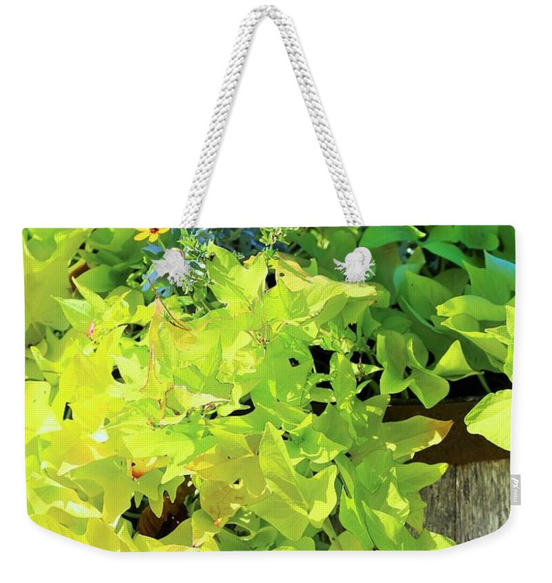 Barrel Of Flowers Weekender Tote Bag featuring the photograph Flower Among Leaves by Jeff Downs