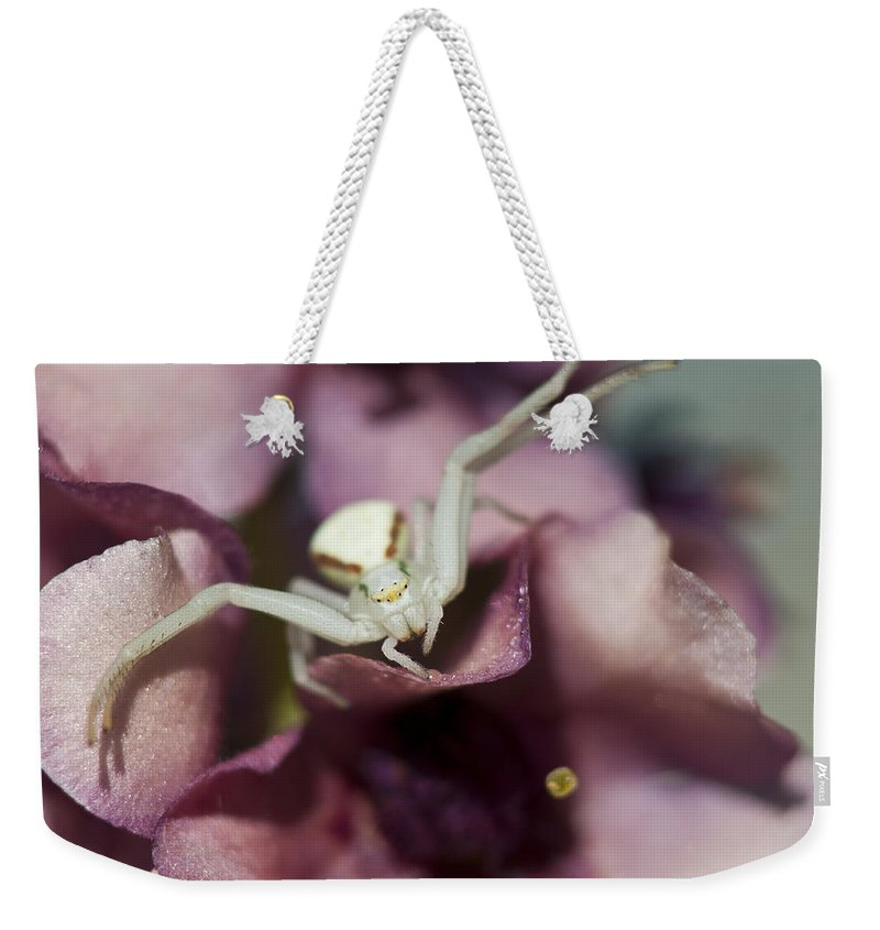 Arachnids Weekender Tote Bag featuring the photograph Flower Spider by Robert Potts
