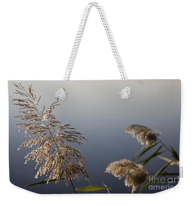 Nature Weekender Tote Bag featuring the photograph Flowering Cane Plant by Nahum Budin