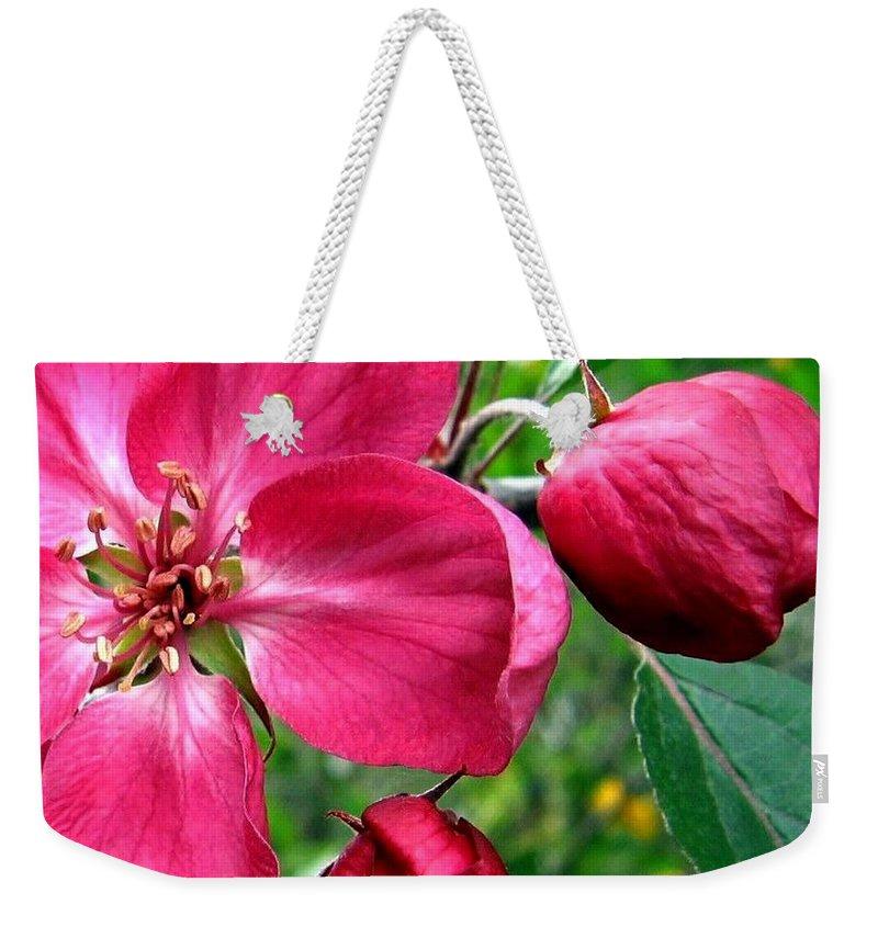 Flowering Crab Apple Weekender Tote Bag featuring the photograph Flowering Crab Apple by Will Borden