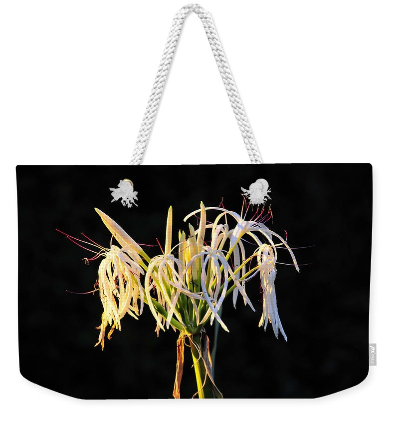 Flower Weekender Tote Bag featuring the photograph Flowering In Florida by David Lee Thompson