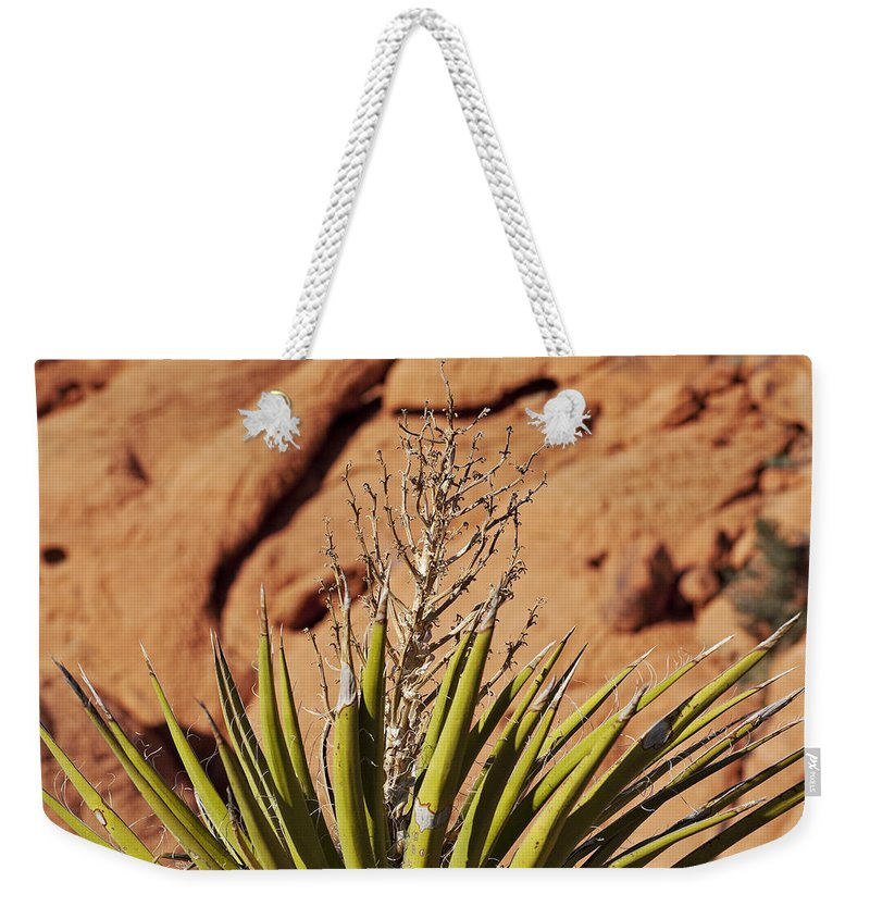Yucca Plant Weekender Tote Bag featuring the photograph Flowerless by Kelley King