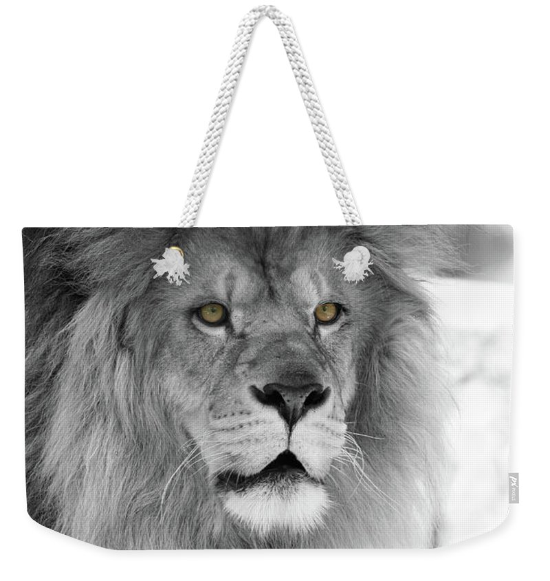 Lion Weekender Tote Bag featuring the photograph Fluffy Tango Black And White T O C by Judy Whitton