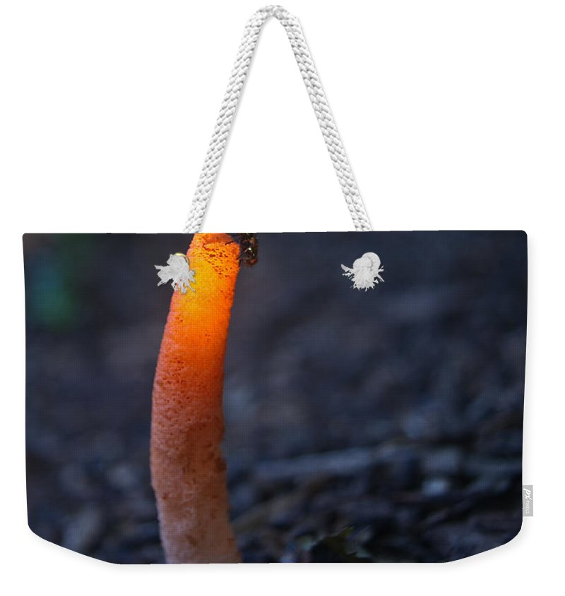 Fly Weekender Tote Bag featuring the photograph Fly And Stinkhorn by Douglas Barnett