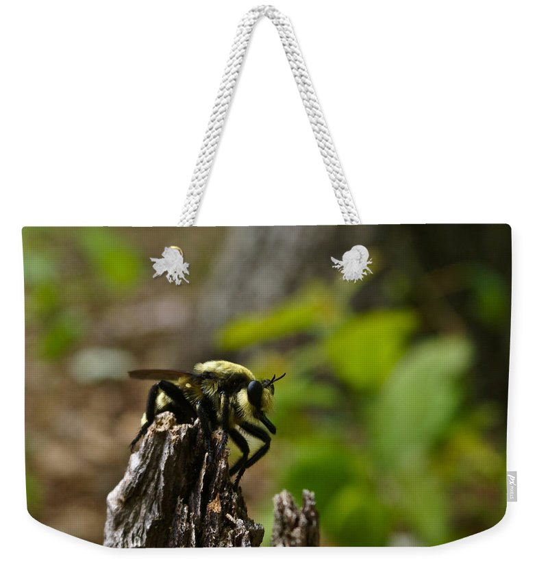 Fly Weekender Tote Bag featuring the photograph Fly On Mountain by Douglas Barnett