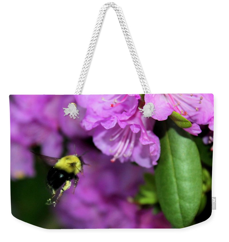 Bumble Bee Weekender Tote Bag featuring the photograph Flying Bee Collecting Pollen by Anita Hiltz