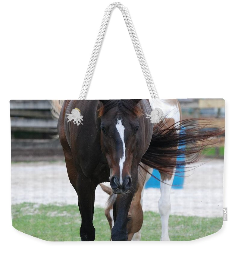 Horses Weekender Tote Bag featuring the photograph Flying Circus by Rob Hans