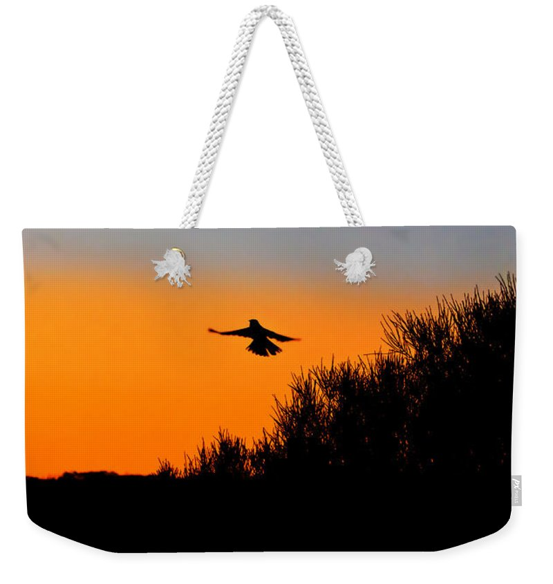 Sunset Weekender Tote Bag featuring the photograph Flying Free In Northen Beaches by Miroslava Jurcik