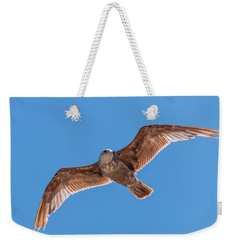 Animal Weekender Tote Bag featuring the photograph Flying Gull by Marv Vandehey
