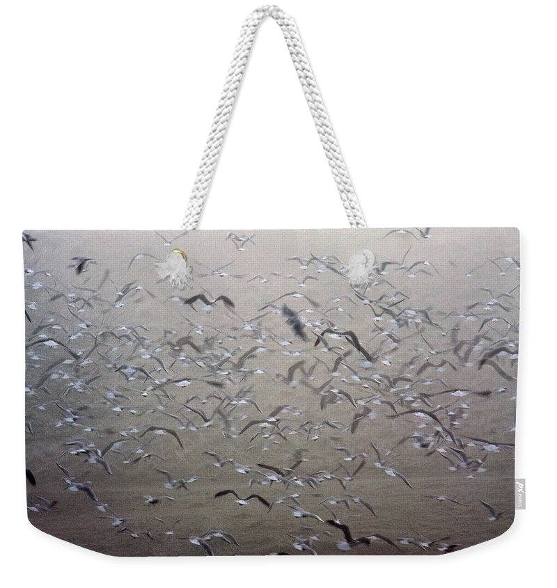 Flight Weekender Tote Bag featuring the photograph Flying Gulls by Bob Kemp