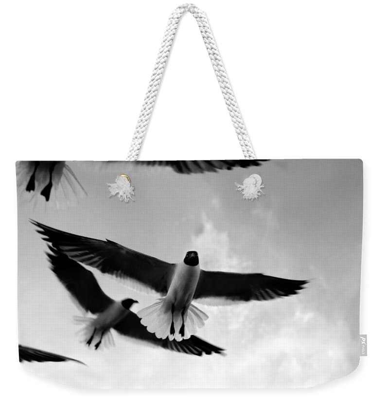 Bird Weekender Tote Bag featuring the photograph Flying High by Marilyn Hunt