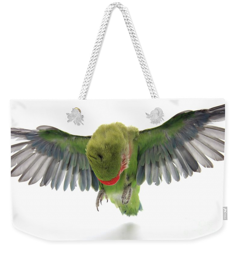 Fly Weekender Tote Bag featuring the photograph Flying Parrot by Yedidya yos mizrachi