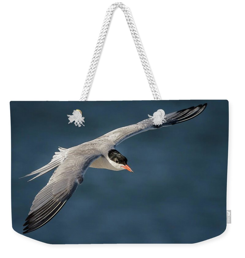 Birds Weekender Tote Bag featuring the photograph Flying Tern 4691 by Karen Celella