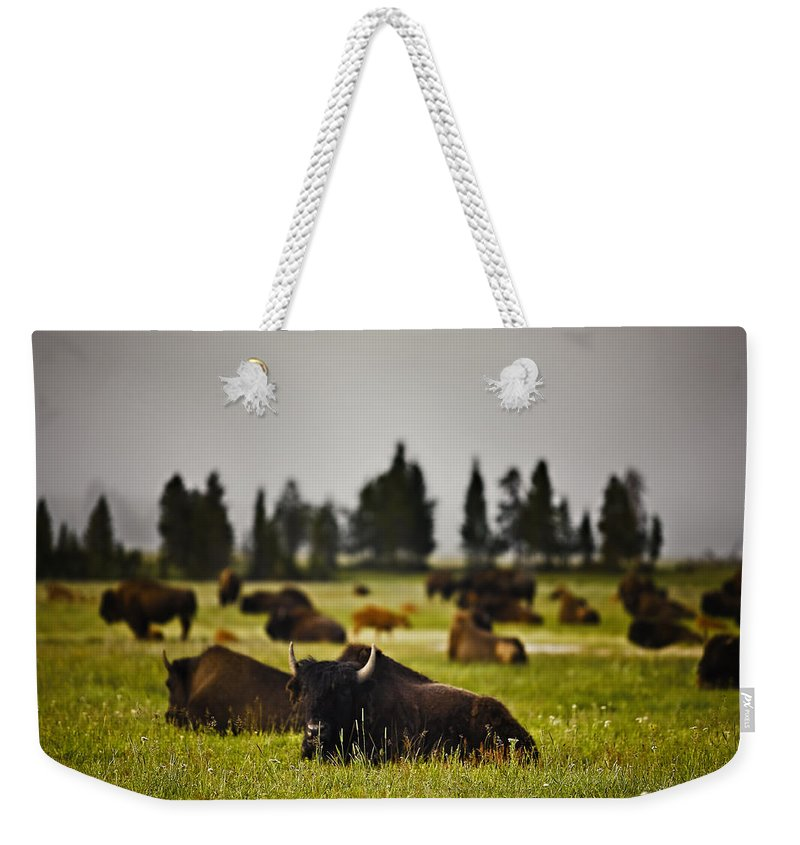 Nature Weekender Tote Bag featuring the photograph Foggy Herd by John K Sampson