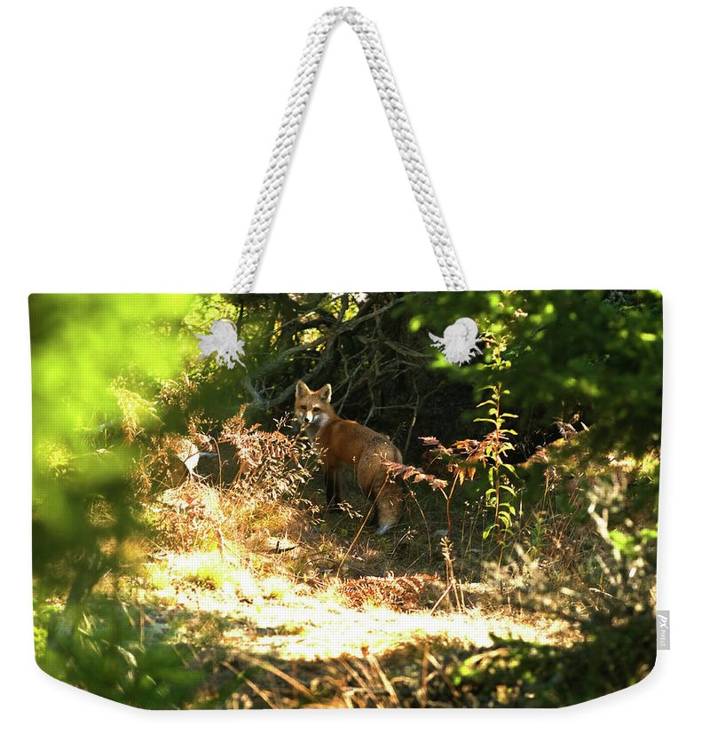 red Fox Weekender Tote Bag featuring the photograph Follow Me by Paul Mangold