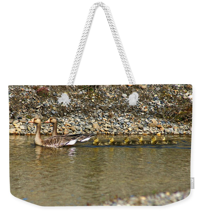 Ducks Weekender Tote Bag featuring the photograph Follow The Leader by Anthony Jones