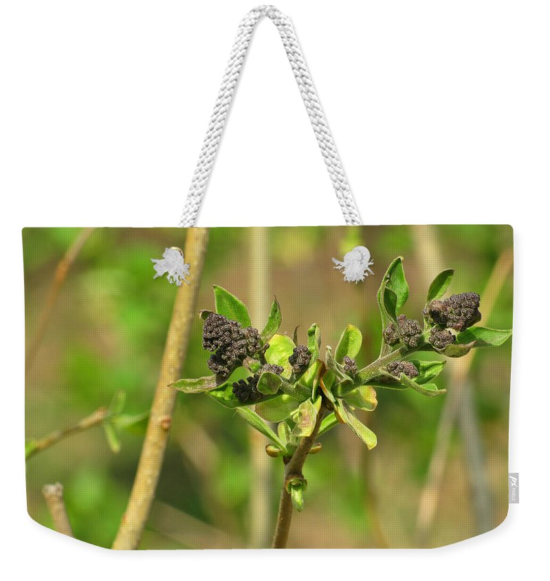 Blooming Weekender Tote Bag featuring the photograph For A Moment I Am Still by Jessica Tolemy