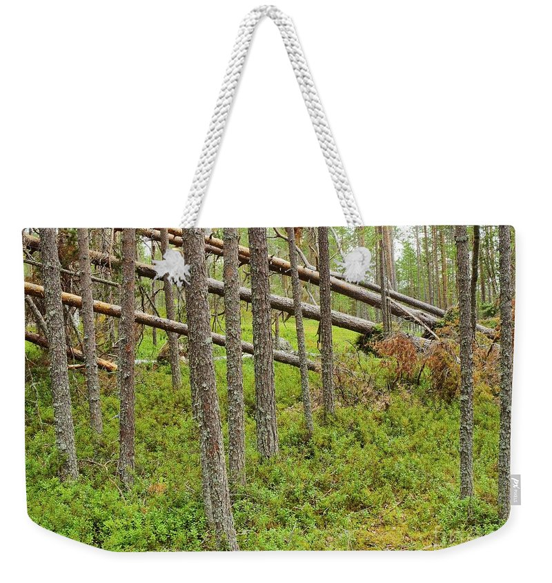 Attractive Weekender Tote Bag featuring the photograph Forest After Storm - Fall Pines In Wild Forest by Vadzim Kandratsenkau