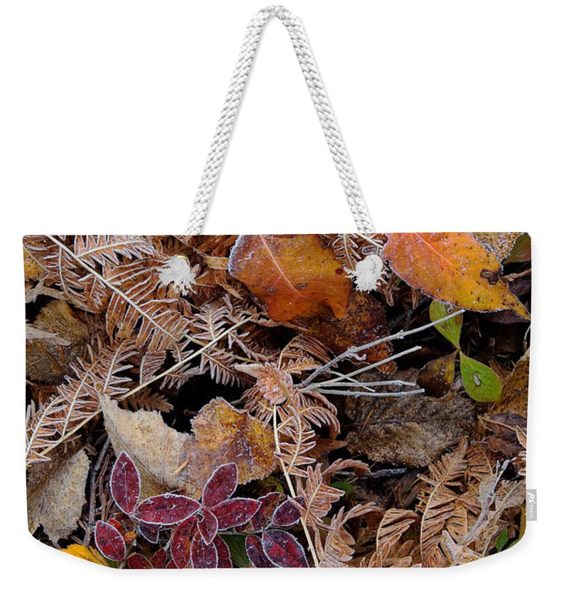 Canada Weekender Tote Bag featuring the photograph Forest Ferns by Doug Gibbons
