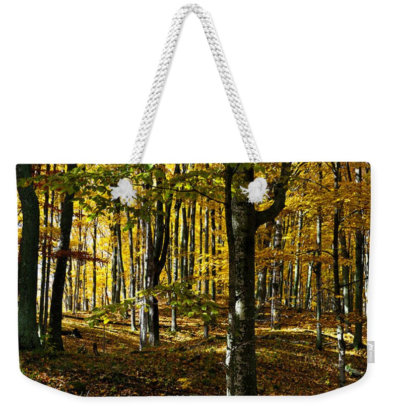 Trees Weekender Tote Bag featuring the photograph Forest Floor Two by Tim Nyberg