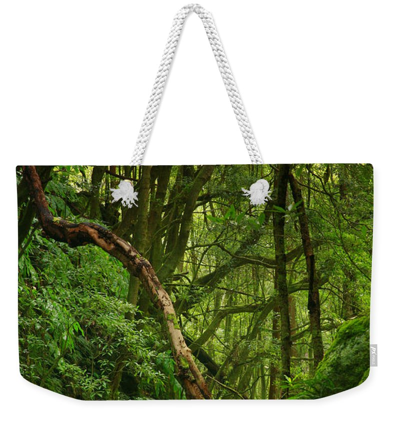 Woodland Weekender Tote Bag featuring the photograph Forest by Gaspar Avila
