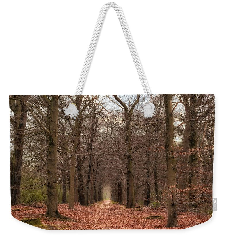 Netherlands Weekender Tote Bag featuring the photograph Forest Lane Near Maarsbergen by Tim Abeln