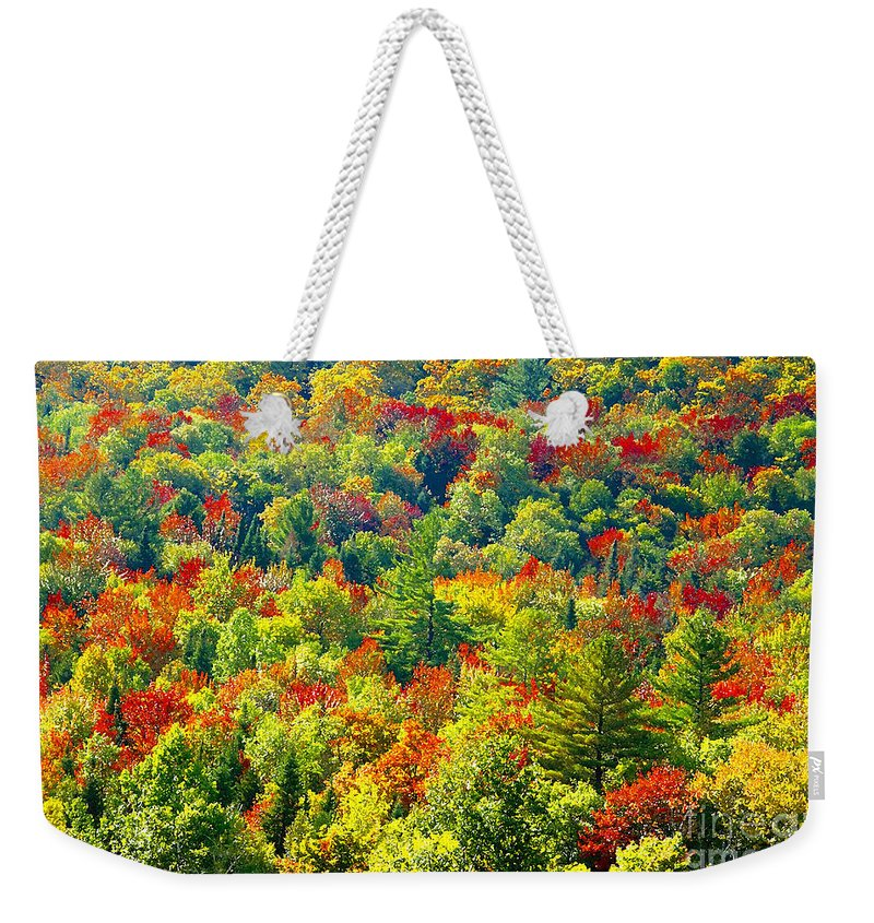 Forest Weekender Tote Bag featuring the photograph Forest Of Color by David Lee Thompson