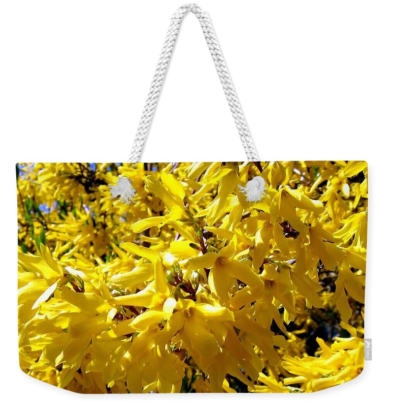 Forsythia Weekender Tote Bag featuring the photograph Forsythia by Will Borden
