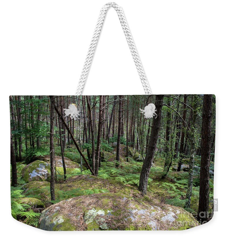 France Weekender Tote Bag featuring the photograph Fountainbleau Forest by Bernd Billmayer