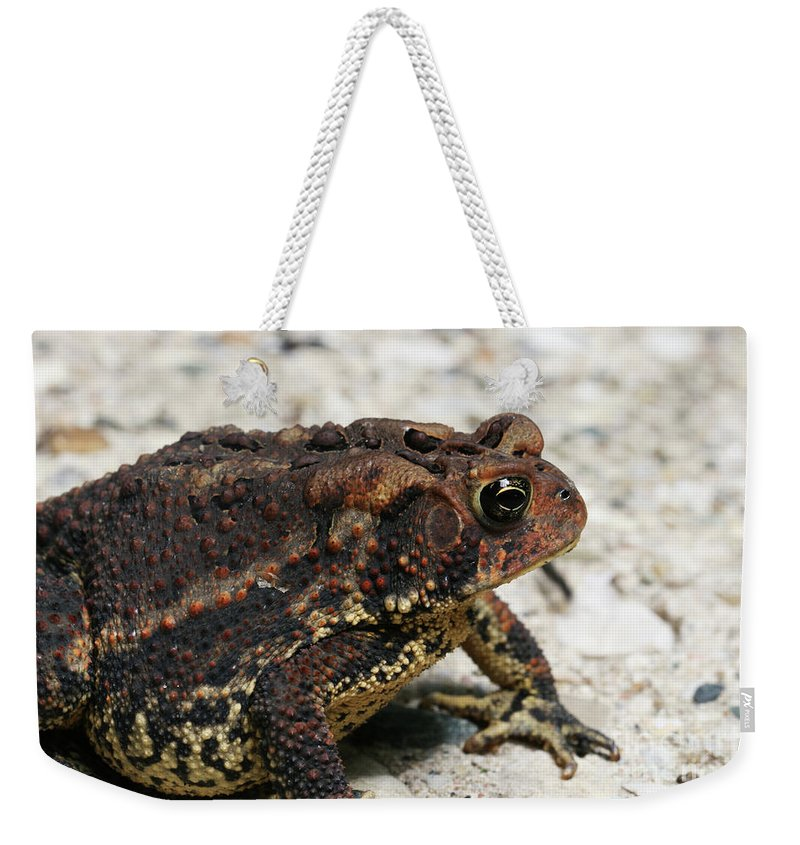 Toad Weekender Tote Bag featuring the photograph Fowler's Toad #2 by Judy Whitton