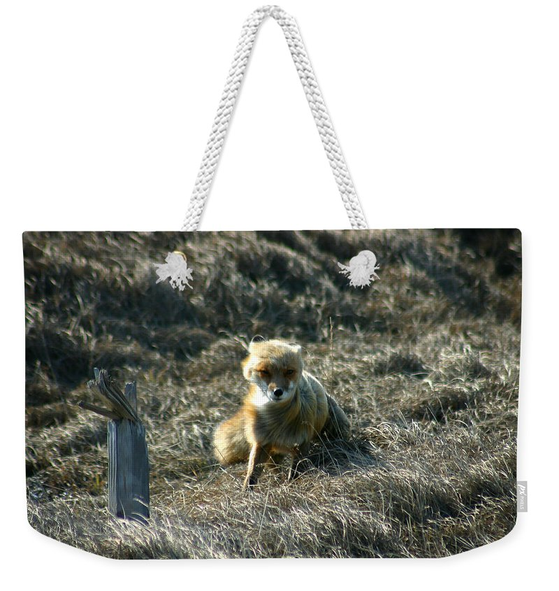 Red Fox Weekender Tote Bag featuring the photograph Fox In The Wind by Anthony Jones