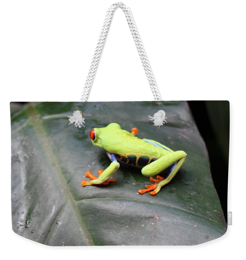 Frog Weekender Tote Bag featuring the photograph Who's There? by Lorraine Baum