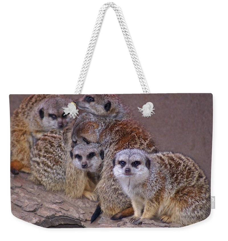 Mer Cats Weekender Tote Bag featuring the photograph Freezing Meer Cats by Heather Coen