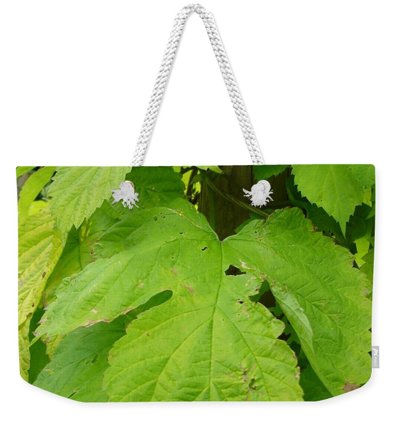 Hop Weekender Tote Bag featuring the photograph Fresh English Golden Hop by Susan Baker