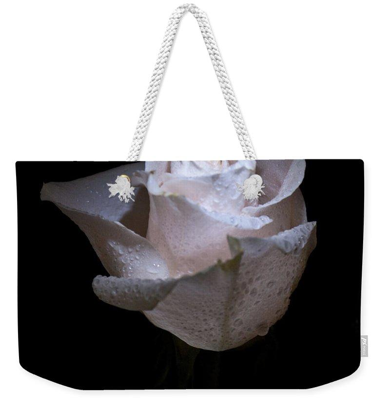 Fresh Weekender Tote Bag featuring the photograph Fresh White Rose by Douglas Barnett