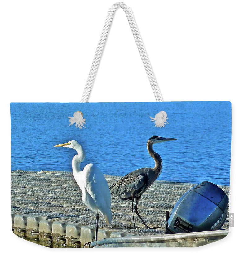 Birds Weekender Tote Bag featuring the photograph Friend Or Foe by Diana Hatcher