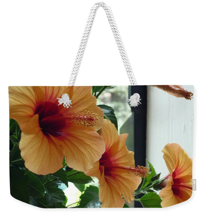 Photography Flower Floral Bloom Hibiscus Peach Weekender Tote Bag featuring the photograph Friends For A Day by Karin Dawn Kelshall- Best