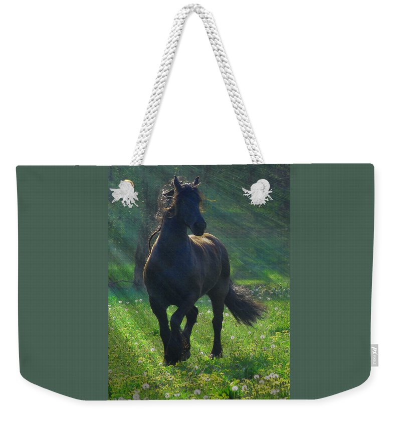 Horses Weekender Tote Bag featuring the photograph Friesian Sun by Fran J Scott