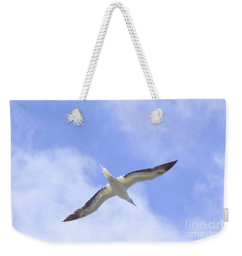 Black Weekender Tote Bag featuring the photograph Frigatebird by Mary Deal