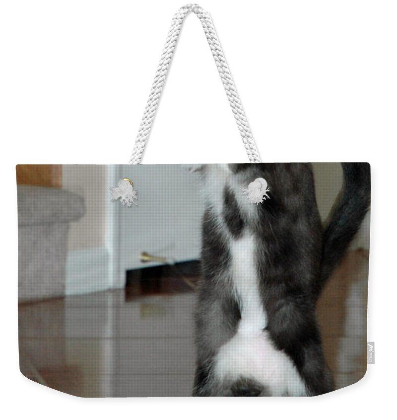 Usa Weekender Tote Bag featuring the photograph Frisbee Cat by LeeAnn McLaneGoetz McLaneGoetzStudioLLCcom