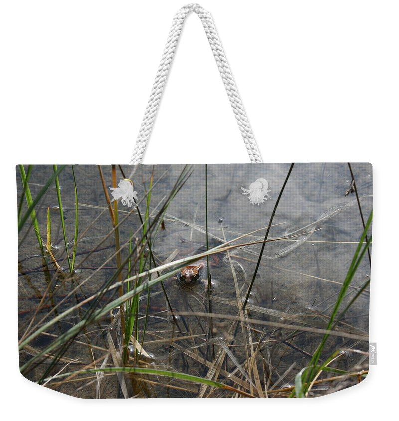 Frog Water Mother Nature Wild Reptile Eyes Lake Marsh Weekender Tote Bag featuring the photograph Frog Home by Andrea Lawrence