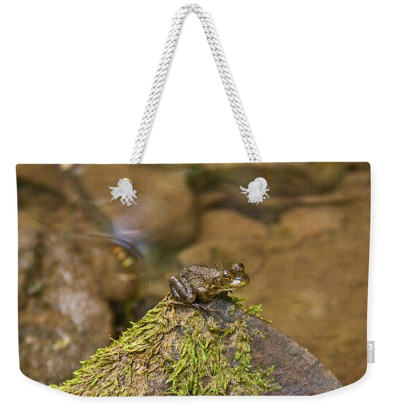 Cumberand Weekender Tote Bag featuring the photograph Froggy On A Hill by Douglas Barnett