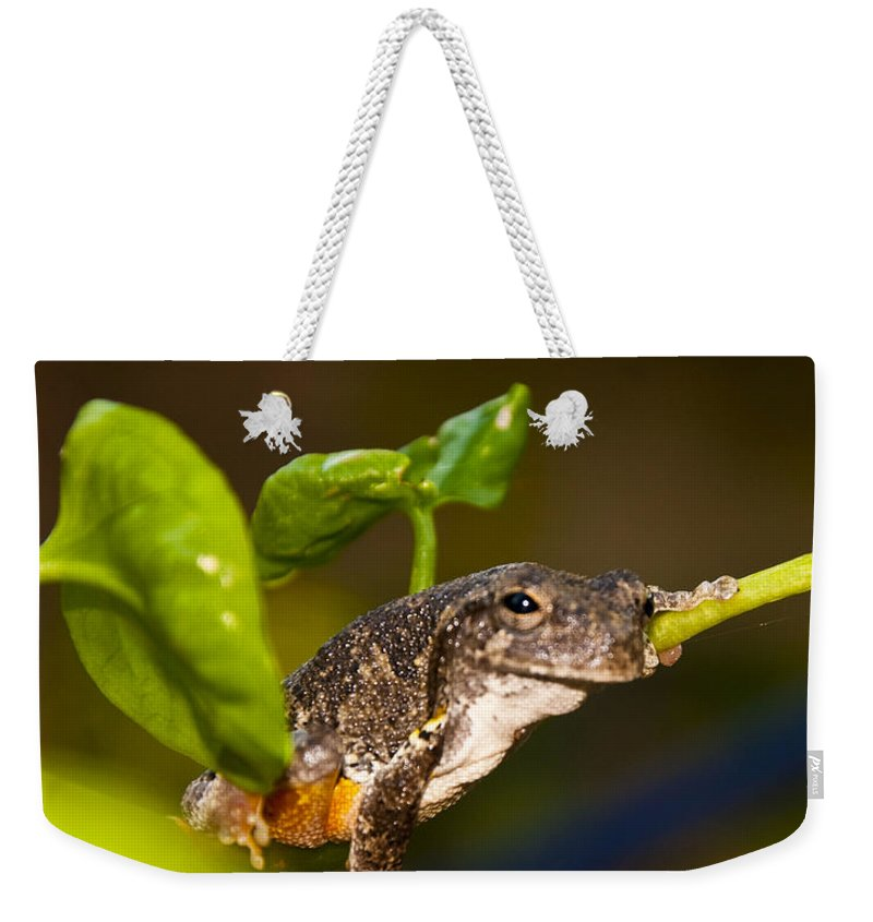 Frog Weekender Tote Bag featuring the photograph Frogs Life by Terry Anderson