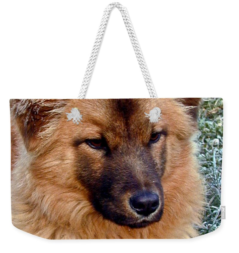 Dog Weekender Tote Bag featuring the photograph Frosty Dog by Douglas Barnett